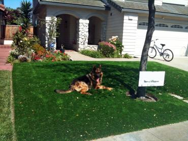 Artificial Grass Photos: Artificial Grass Installation Stanfield, Arizona Dog Grass,  Dog Kennels