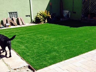 Artificial Grass Photos: Artificial Turf Santa Cruz, Arizona Fake Grass For Dogs, Backyard Design