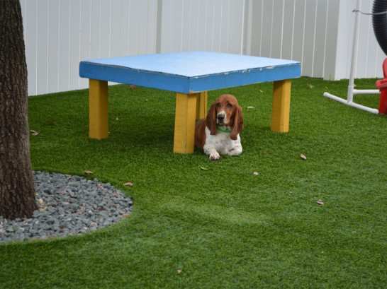 Artificial Grass Photos: Outdoor Carpet Ak Chin, Arizona Dogs, Dogs