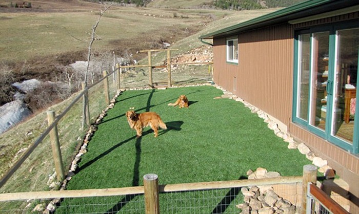Pet Grass, Artificial Grass For Dogs in Mesa, Arizona